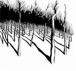 Forest, black and white vector illustration. Stock Photo - Royalty-Free, Artist: Sylverarts                    , Code: 400-05358271