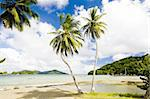 Batteaux Bay, Tobago Stock Photo - Royalty-Free, Artist: phbcz                         , Code: 400-05362123