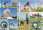 composite picture with purebred dogs in training of agility Stock Photo - Royalty-Free, Artist: cynoclub                      , Code: 400-05363860