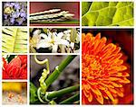 Nature collage with brightly colored fauna and flora Stock Photo - Royalty-Free, Artist: smarnad                       , Code: 400-05367614