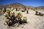Scenic Joshua Tree National Park in California Stock Photo - Royalty-Free, Artist: Wilsilver77                   , Code: 400-05368134
