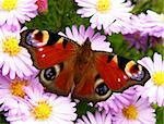 closeup detail of butterfly on flower in summer time Stock Photo - Royalty-Free, Artist: Xetra                         , Code: 400-05378817
