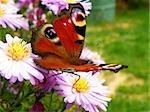 closeup detail of butterfly on flower in summer time Stock Photo - Royalty-Free, Artist: Xetra                         , Code: 400-05378818