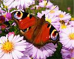 closeup detail of butterfly on flower in summer time Stock Photo - Royalty-Free, Artist: Xetra                         , Code: 400-05378819