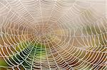 closeup of spider web with dew drops in the morning Stock Photo - Royalty-Free, Artist: courtyardpix                  , Code: 400-05383219