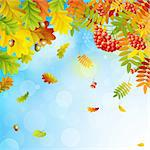 Autumn background with colorful leaves on sky and place for text. Vector illustration. Stock Photo - Royalty-Free, Artist: avian                         , Code: 400-05387805