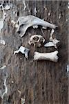 An arrangement of animal bones on a wood surface Stock Photo - Premium Royalty-Free, Artist: Robert Harding Images, Code: 653-05393327
