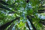 Canopies of ponga trees, New Zealand Stock Photo - Premium Royalty-Free, Artist: Minden Pictures, Code: 6106-05393758
