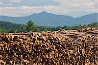 Stack of logs in a forest, Berlin, New Hampshire, USA Stock Photo - Premium Royalty-Freenull, Code: 6105-05396385