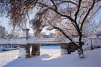 Snow covered trees with a footbridge in a public park, Boston Public Garden, Boston, Massachusetts, USA Stock Photo - Premium Royalty-Freenull, Code: 6105-05396930