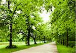 Alley in Nymphenburg Park Stock Photo - Premium Royalty-Freenull, Code: 6106-05403759