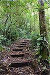 Steps ascending on path. Tropical Cloud Forest Stock Photo - Premium Royalty-Freenull, Code: 6106-05410995