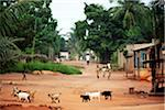 african town streets. Stock Photo - Premium Royalty-Freenull, Code: 6106-05415542
