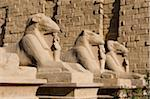 Temple of Karnak, Luxor, Egypt Stock Photo - Premium Royalty-Free, Artist: AWL Images, Code: 6106-05417414