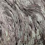 driftwood, close-up Stock Photo - Premium Royalty-Free, Artist: iRepublic, Code: 6106-05421479