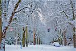 December 2008 Snow Stock Photo - Premium Royalty-Free, Artist: Bettina Salomon, Code: 6106-05423033