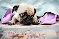 pvg - Bad Shoe Stock Photo - Premium Royalty-Freenull, Code: 6106-05426643