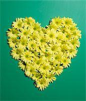 Yellow daisies in heart shape Stock Photo - Premium Royalty-Freenull, Code: 6106-05426910
