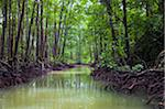 Mangrove forest and river Stock Photo - Premium Royalty-Free, Artist: Oriental Touch           , Code: 6106-05445467