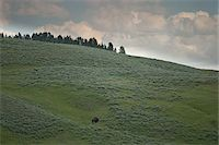 Bison on Hillside, Yellowstone National Park, Wyoming, USA Stock Photo - Premium Royalty-Freenull, Code: 600-05452242