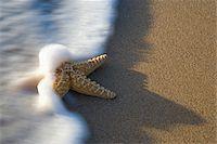 Surf rushing over starfish on beach, elevated view (blurred motion) Stock Photo - Premium Royalty-Freenull, Code: 6106-05455990