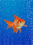 Goldfish (Carassius auratus) surrounded by bubbles (Digital Composite) Stock Photo - Premium Royalty-Free, Artist: Minden Pictures, Code: 6106-05459180