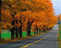This is an autumn road in New England. There are fall leaves on the trees that line the road that trails off into infinity. Stock Photo - Premium Royalty-Freenull, Code: 6106-05472386