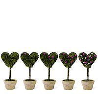 potted plant - Heart-shaped potted plants Stock Photo - Premium Royalty-Freenull, Code: 6106-05507887