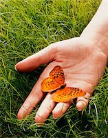 release - England, London, Great Spangled Fritillary butterfly on man's hand, close-up Stock Photo - Premium Royalty-Freenull, Code: 6106-05508418