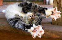 Cat stretching, indoors Stock Photo - Premium Royalty-Freenull, Code: 6106-05510289