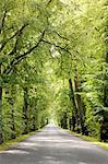 Treelined avenue, Poland Stock Photo - Premium Royalty-Free, Artist: Andrew Kolb, Code: 614-05522903
