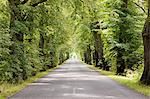 Treelined avenue, Poland Stock Photo - Premium Royalty-Free, Artist: CulturaRM, Code: 614-05522904