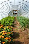 Plants in Greenhouse, Laugaras, South Iceland, Iceland Stock Photo - Premium Royalty-Free, Artist: Atli Mar Hafsteinsson, Code: 600-05524153