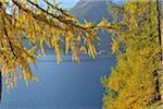 View of Silsersee Through Trees in Autumn, Engadin, Canton of Graubunden, Switzerland
