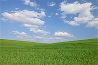 scenic and spring (season) - Grain Field, Reinheim, Darmstadt-Dieburg, Hesse, Germany Stock Photo - Premium Royalty-Freenull, Code: 600-05524479