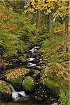 Forest Stream, Triberg im Schwarzwald, Schwarzwald-Baar, Black Forest, Baden-Wurttemberg, Germany