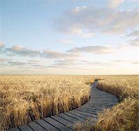 Boardwalk Through Wheat Field, Itasca, Texas, USA Stock Photo - Premium Rights-Man