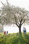 Family playing under tree in park Stock Photo - Premium Royalty-Freenull, Code: 635-05550206