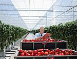 Worker examining produce in greenhouse Stock Photo - Premium Royalty-Free, Artist: Science Faction, Code: 635-05550680