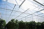 Plants growing in greenhouse Stock Photo - Premium Royalty-Free, Artist: Ikon Images, Code: 635-05550693