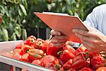 Technician with clipboard examining produce Stock Photo - Premium Royalty-Freenull, Code: 635-05550711