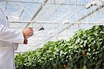Scientist writing on clipboard in greenhouse Stock Photo - Premium Royalty-Freenull, Code: 635-05550743