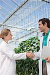 Scientists shaking hands in greenhouse Stock Photo - Premium Royalty-Free, Artist: Science Faction, Code: 635-05550747