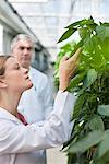 Scientist examining plants in greenhouse Stock Photo - Premium Royalty-Free, Artist: Science Faction, Code: 635-05550756