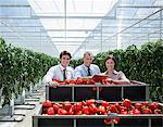 Workers in greenhouse standing with produce Stock Photo - Premium Royalty-Free, Artist: Blend Images, Code: 635-05550758