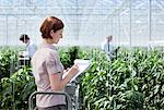 Worker writing on clipboard in greenhouse Stock Photo - Premium Royalty-Freenull, Code: 635-05550781