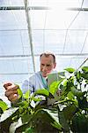 Scientist examining plants in greenhouse Stock Photo - Premium Royalty-Freenull, Code: 635-05550788