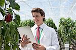 Scientist examining plants in greenhouse Stock Photo - Premium Royalty-Freenull, Code: 635-05550982