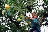 Boy picking fruit in tree Stock Photo - Premium Royalty-Freenull, Code: 649-05555429