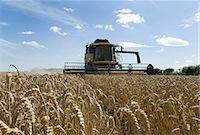 Thresher harvesting wheat Stock Photo - Premium Royalty-Freenull, Code: 649-05556006